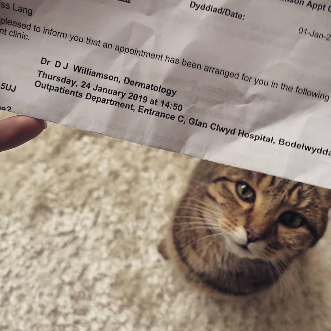 Cat under doctors appointment slip